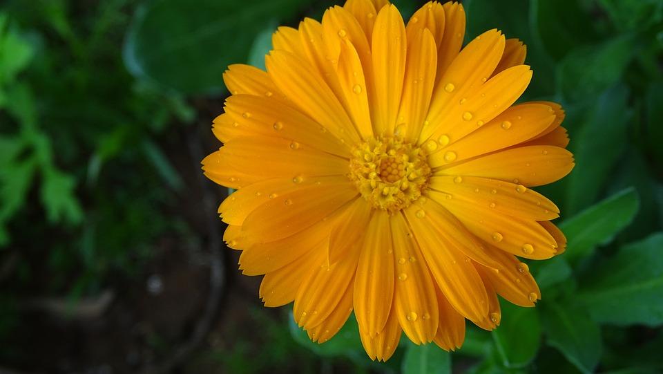 Nature, Summer, Flora, Flower, Garden