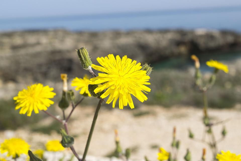 Nature, Summer, Outdoors, Flower, Plant, Sun, Sea