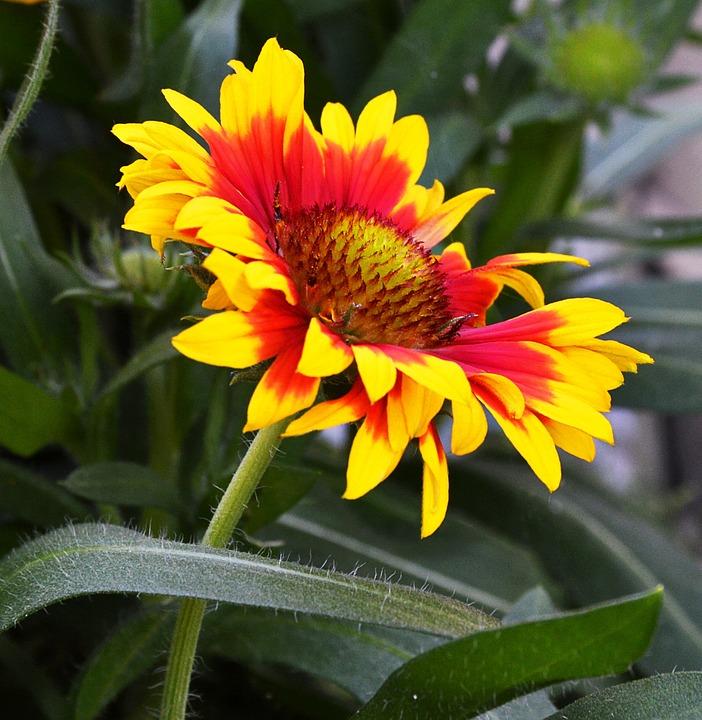 Flower, Yellow Red, Summer