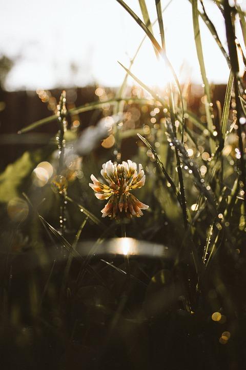 Stripe, Lines, Flare, Burn, Flower, Sunset