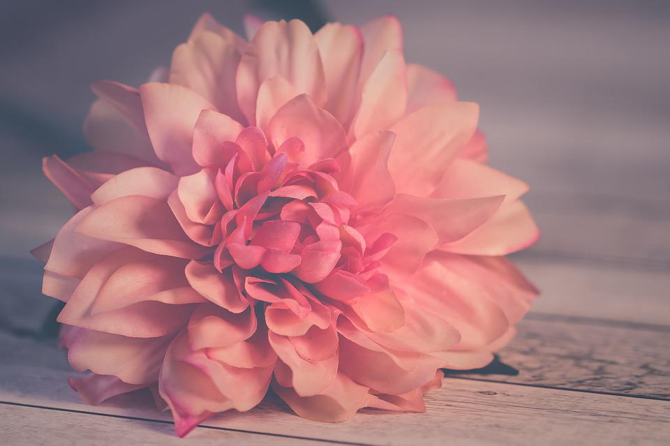 Flower, Petals, Table