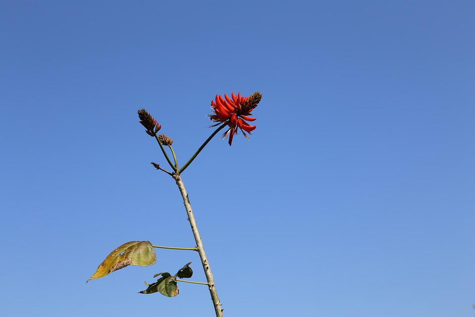 Guangdong, Taishan, Kawashima Under, Blue Sky, Flower