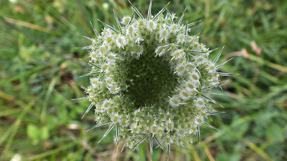 Flower, The Ball, Spikes, Nature, Flora, Colorful