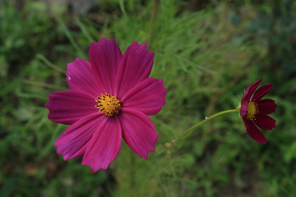 Purple Flowers, Flower, Spring, The Leaves Are