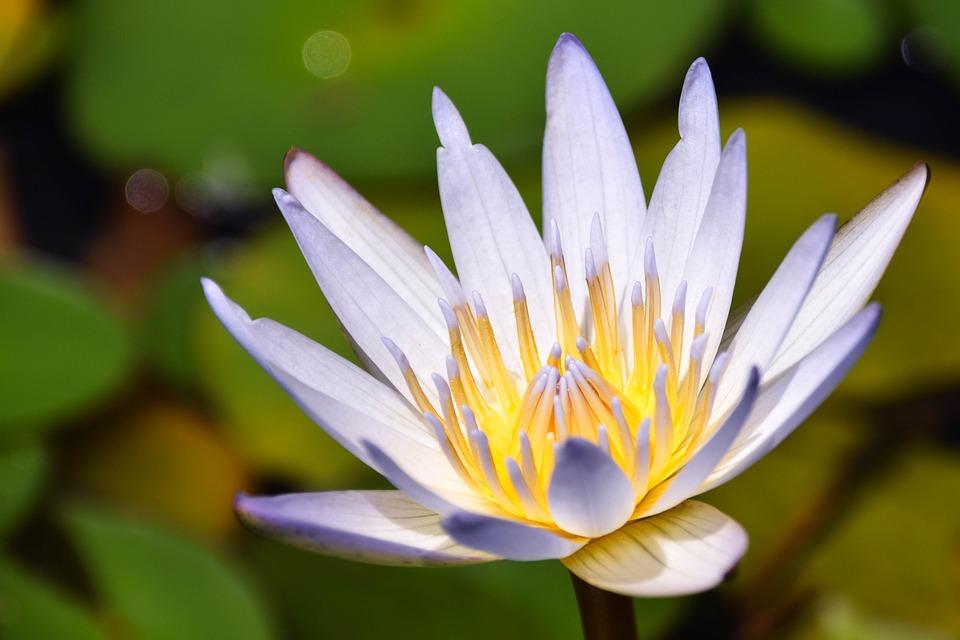 Bali, Indonesia, Travel, Nature, Botany, Flower