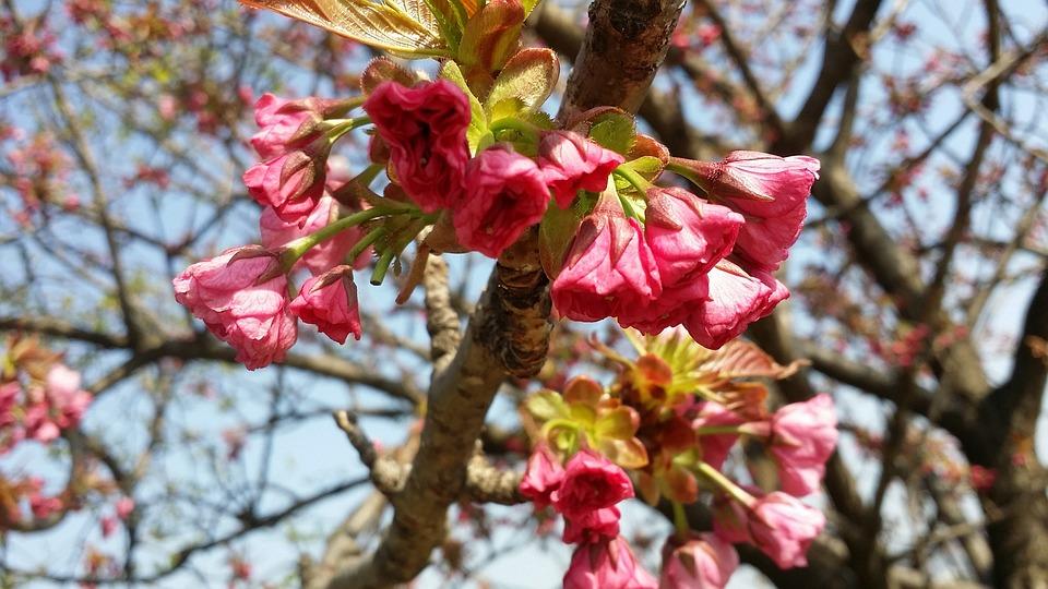 Free photo flower tree spring flowers bright pink max pixel spring flowers bright pink flower tree mightylinksfo