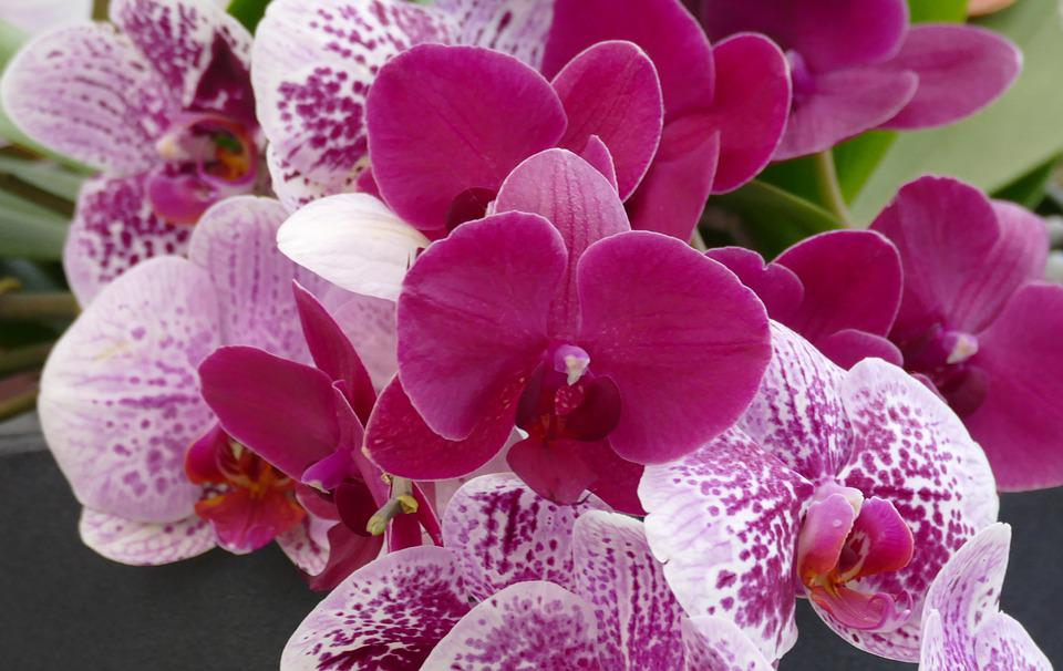 Flower, Plant, Nature, Flowers, Tropical, Orchid