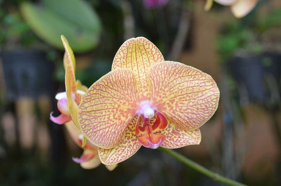 Nature, Flower, Plant, Tropical, Stranger, Orchid