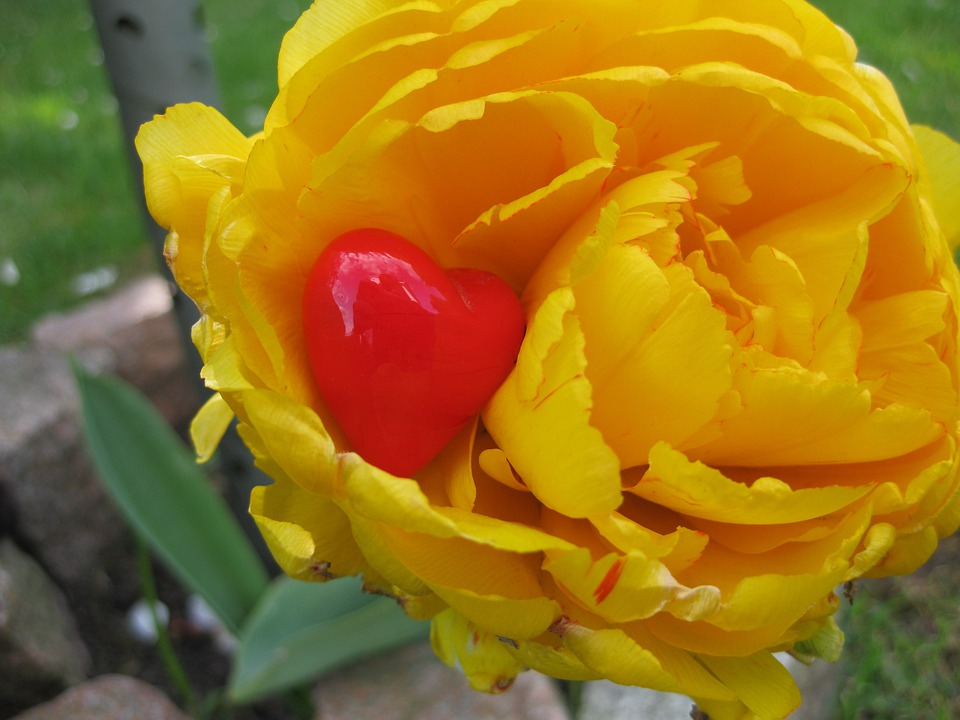 Heart, Tulip, Decoration, Flower, Plant, Yellow, Red