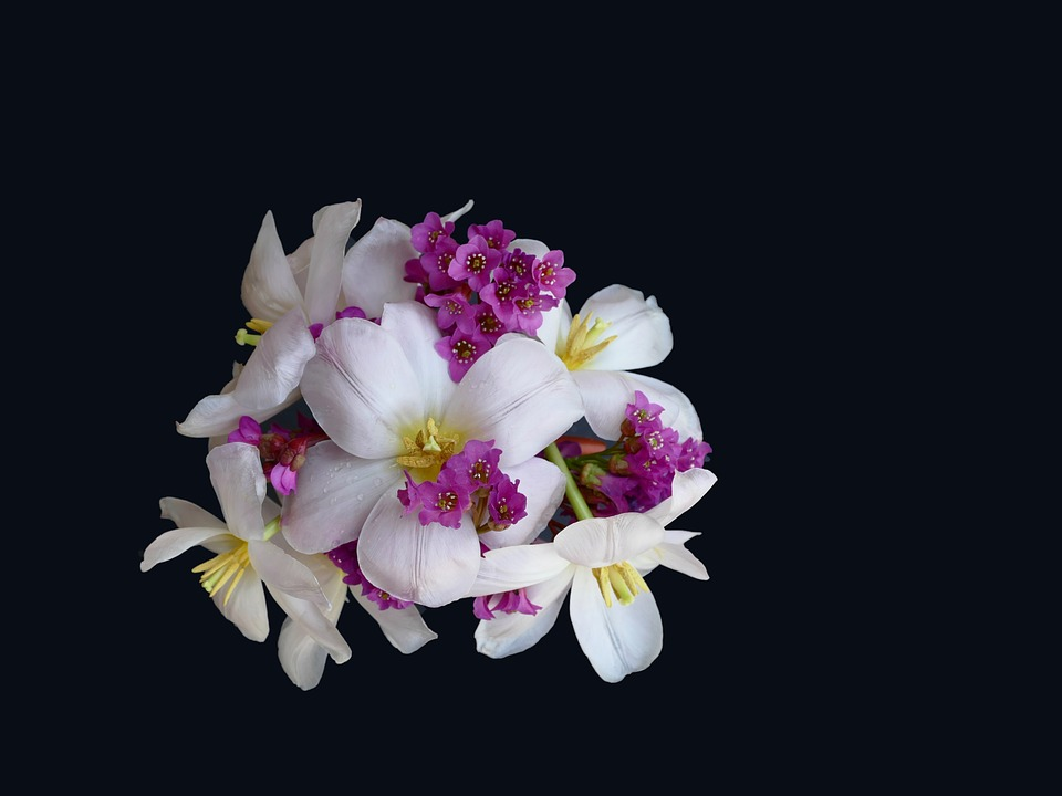 Floral Arrangement, Tulip White, Bergenia, Flower