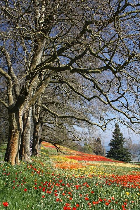 Spring, Flowers, Tulips, Flower, Petals, Botany