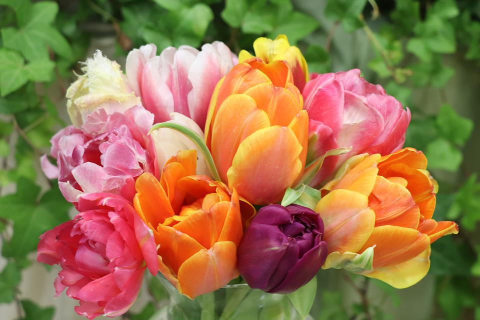 Tulips, Bouquet, Flowers, Spring, Flower, Bloom, Flora