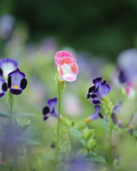 Photo By Deepika Bibin, Flower, Wishbone, Good, Vibes