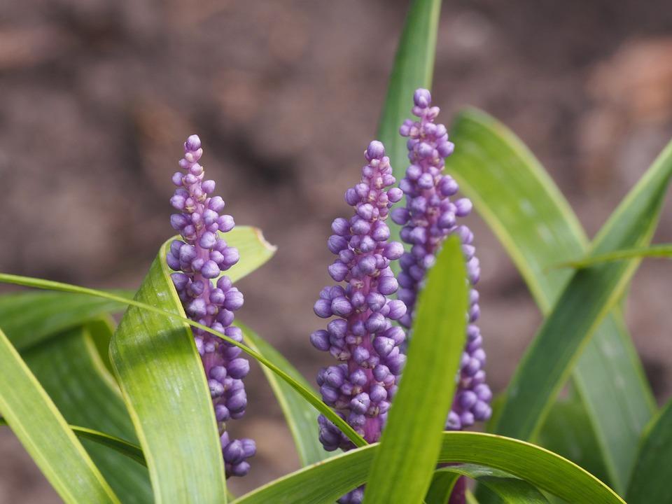 Flower, Violet, Close, Purple, Blossom, Bloom, Nature