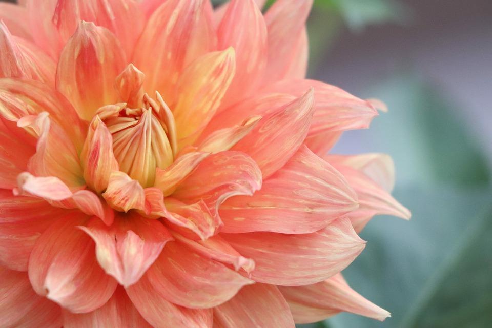 Flower, Violet Flower, Flora, Sun, Sunset, Yellow