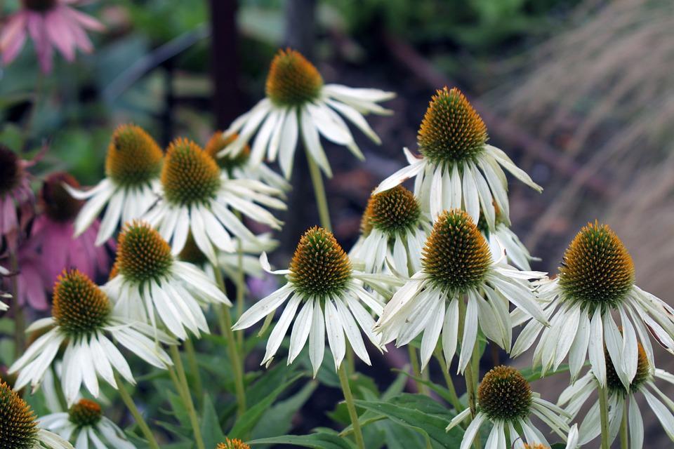 Flower, White, Beautiful Flower, Nature, White Flowers