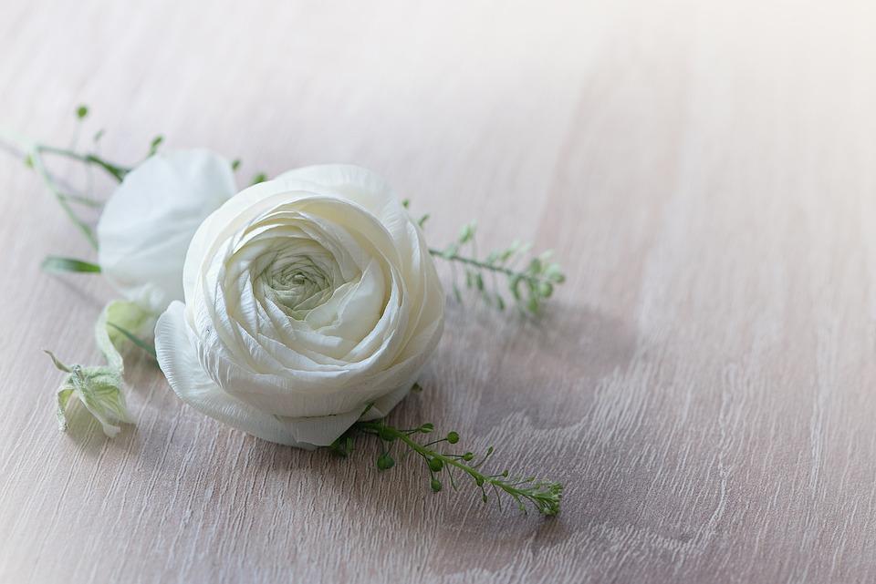 Flower, Ranunculus, Blossom, Bloom, White, Spring