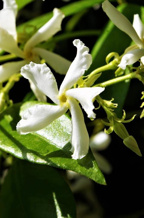 Free photo flower white flower max pixel flower white flower mightylinksfo Images