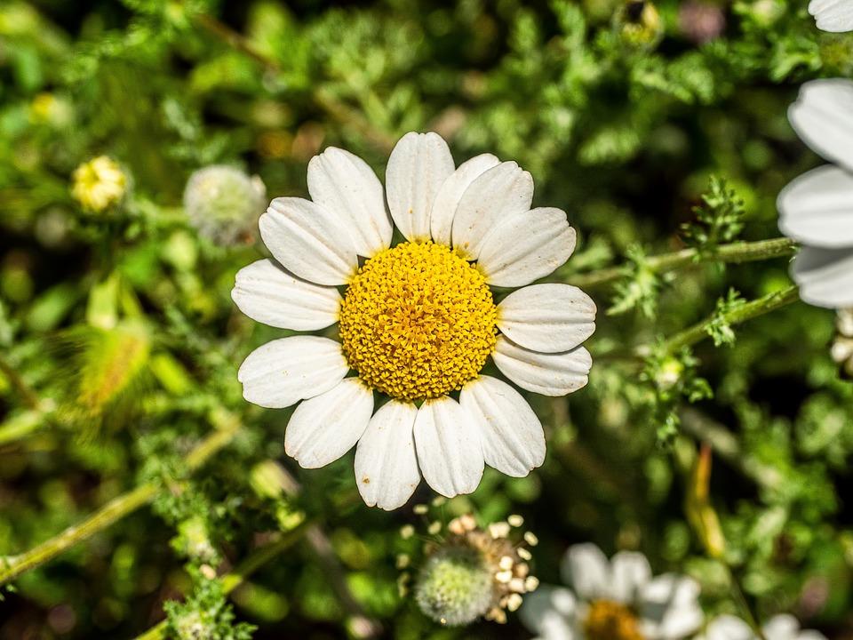 Spring, Flower, Pollen, White Flower, Bloom, Blossom