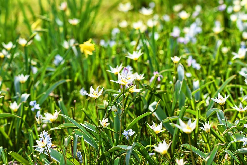 White Flower, Flower, Spring Flower, Plant