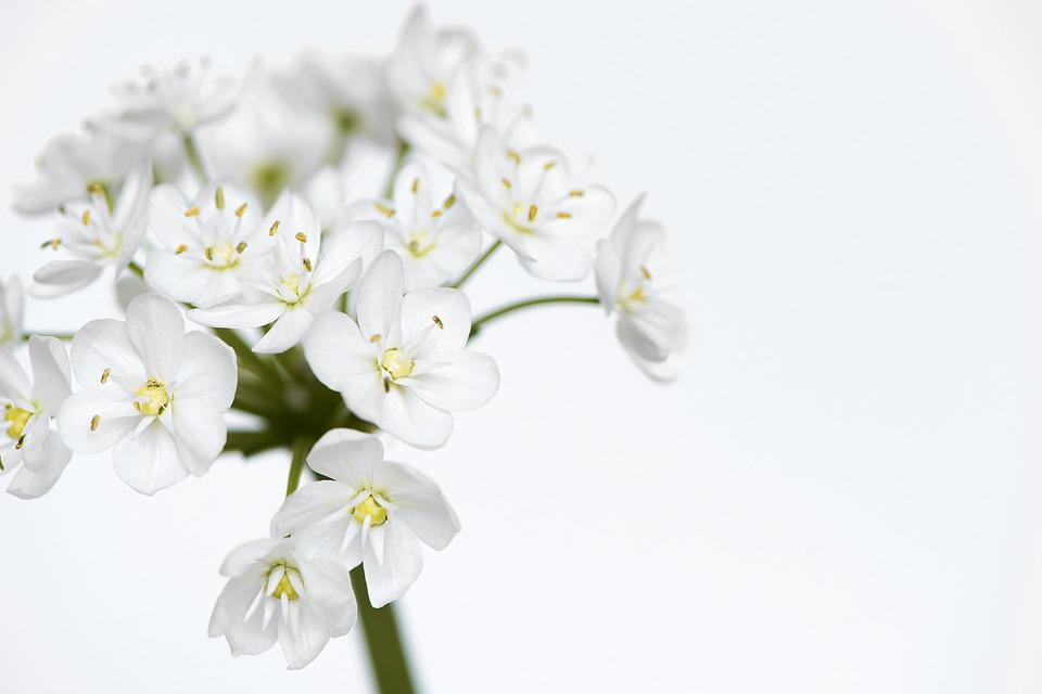 Free photo flower white flowers flowers white small flowers max pixel flower flowers white small flowers white flowers mightylinksfo