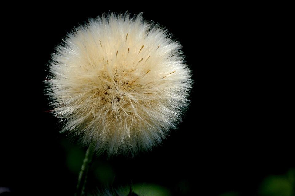 Flower, Black, White, White Flower, Cute