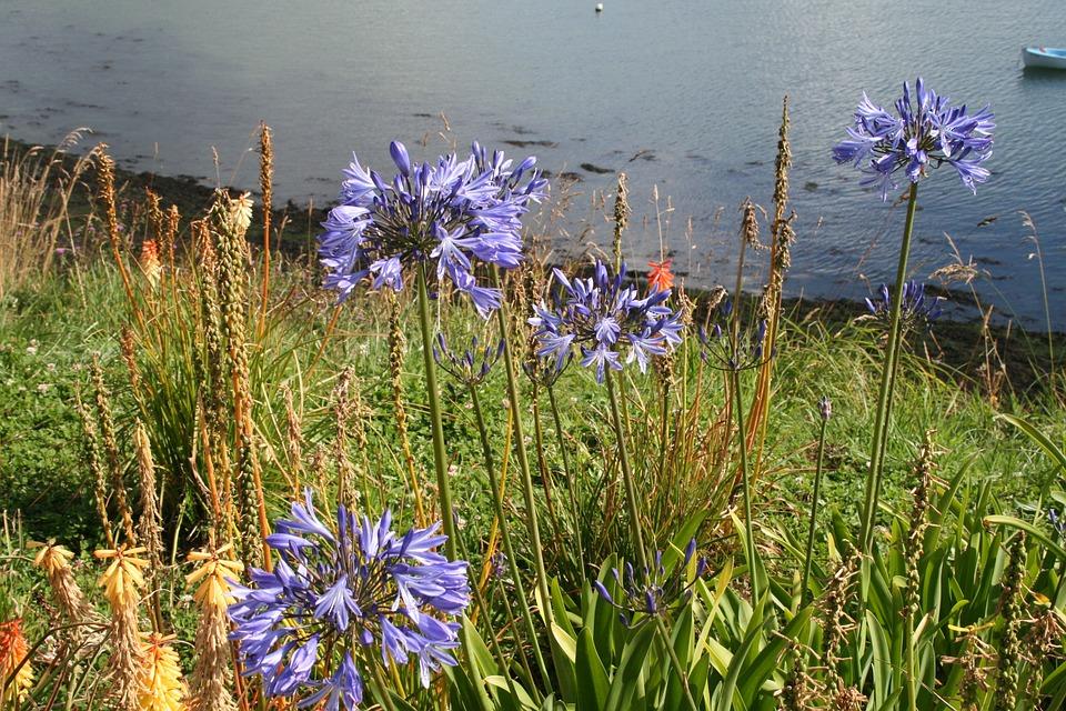 Flower, Nature, Wild Flowers