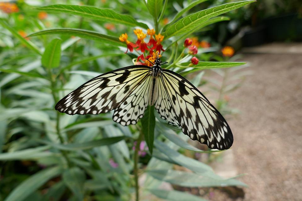 Butterfly, Flower, Foliage, Tree, Plants, Wings
