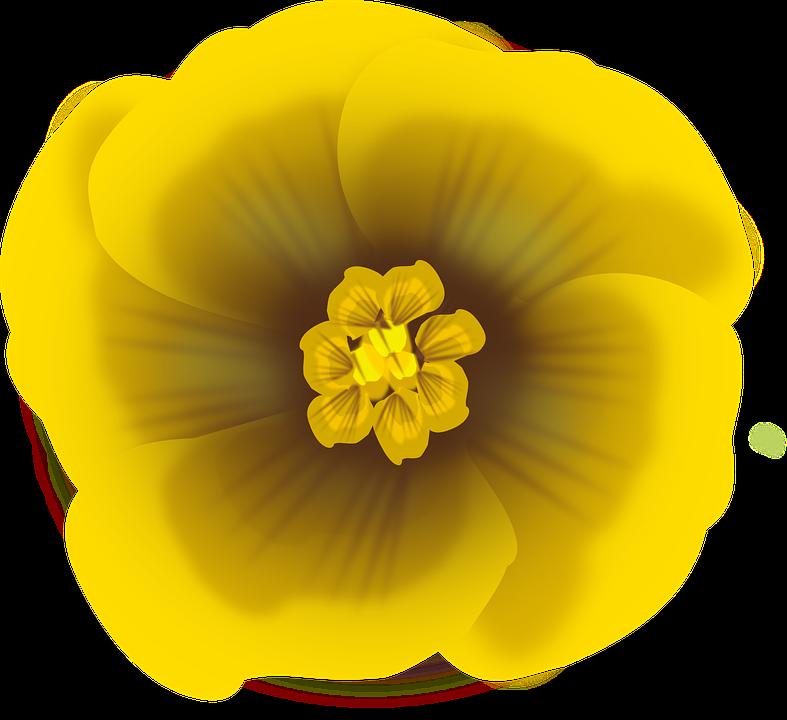 Flower, Yellow, Bloom