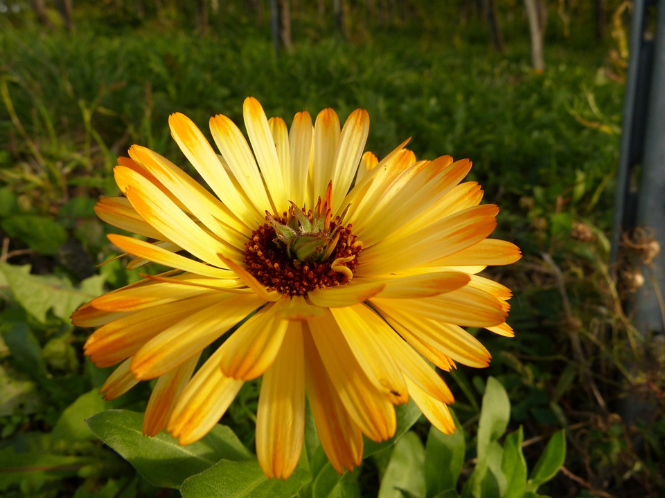 Flower, Blossom, Bloom, Yellow, Nature, Plant