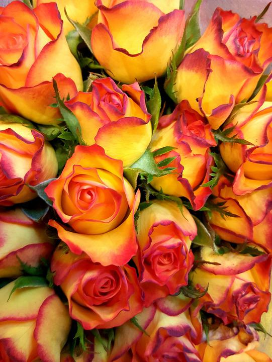 Free photo flower yellow bright red roses rose blooms max pixel roses yellow red bright flower rose blooms mightylinksfo