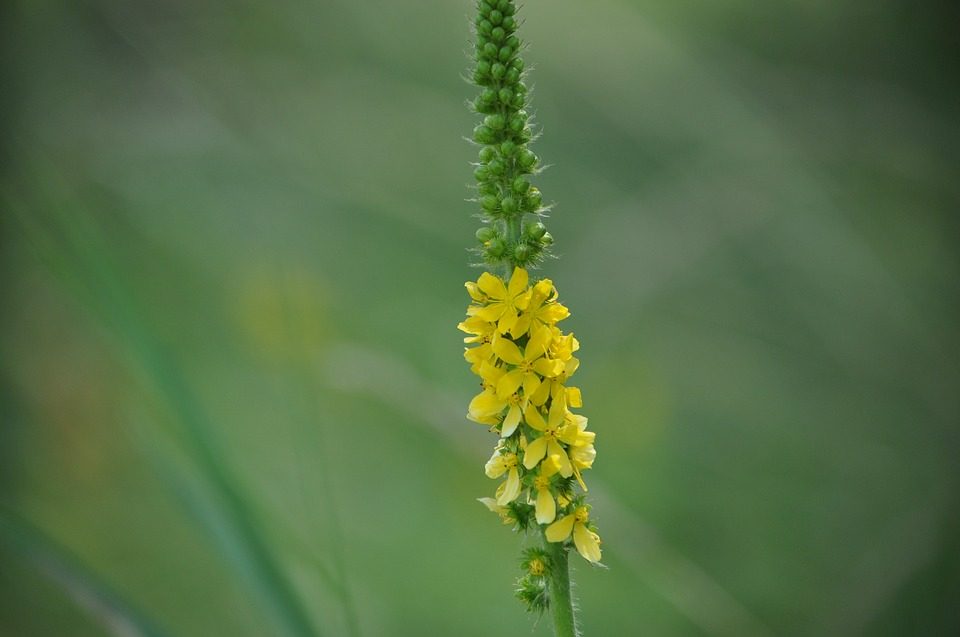 Nature, Green, Yellow, Flower, Spring, Fresh, Colorful