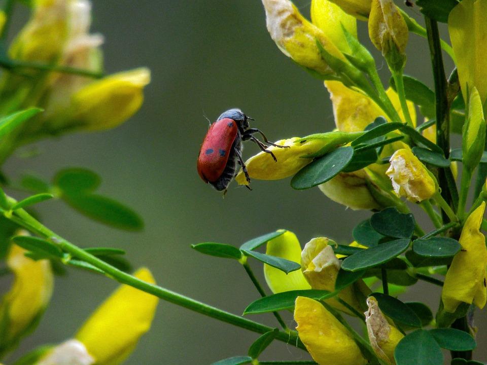 Free photo flower yellow flower bug insect yellow flowers max pixel yellow flowers insect yellow flower bug flower mightylinksfo Choice Image