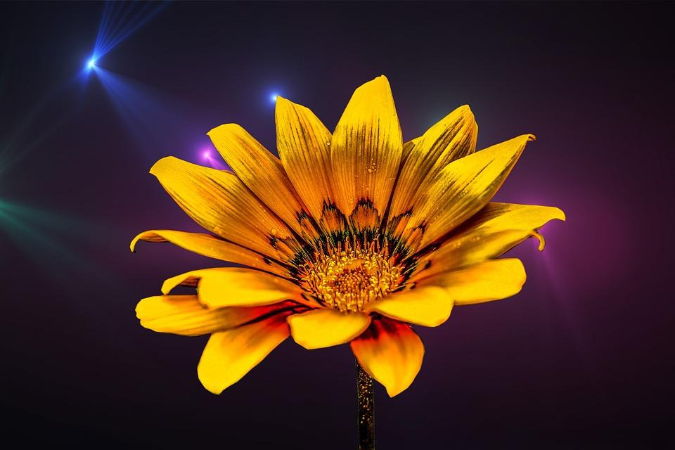 Flower Gérbel, Yellow Flower, Flower, Gérbela