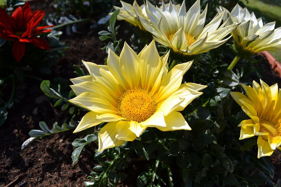 Vase, Flower, Flowers, Yellow Flower, Petal, Petals