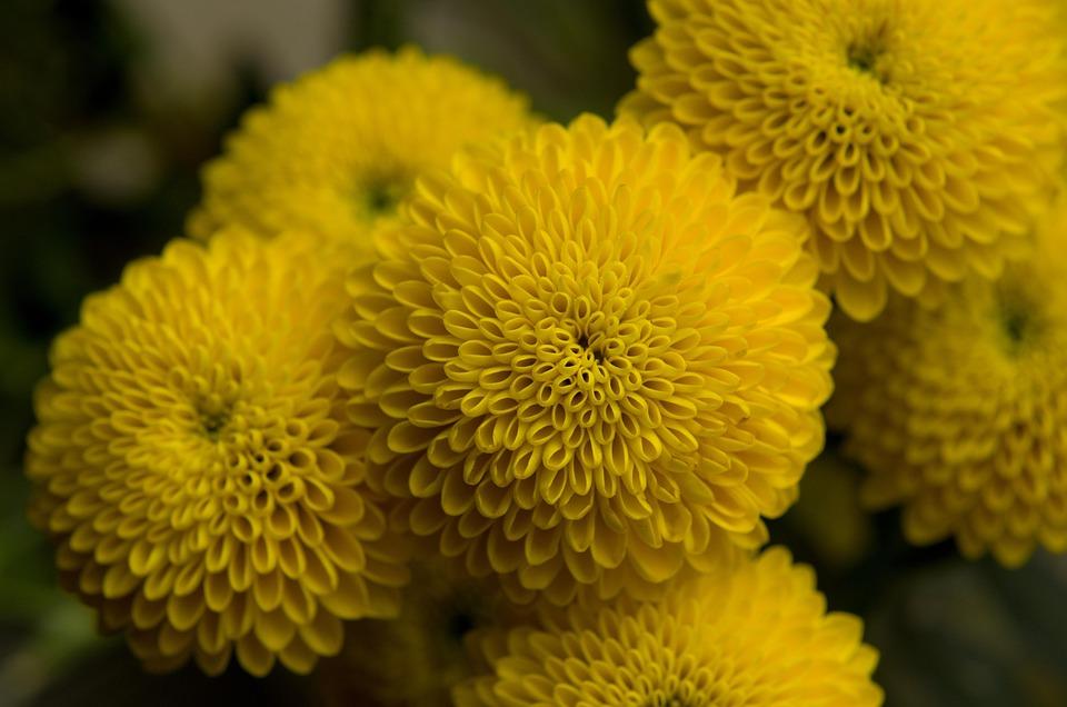 Yellow, Flower, Symmetry, Spring, Flowers, Summer