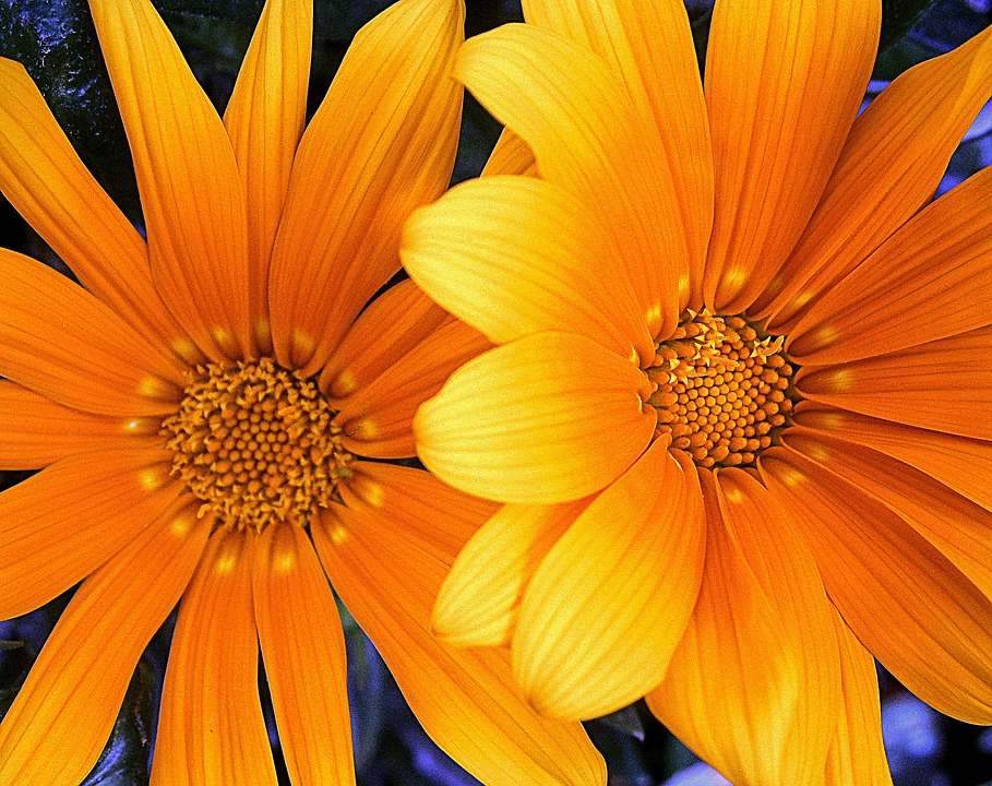 Orange, Yellow, Flower