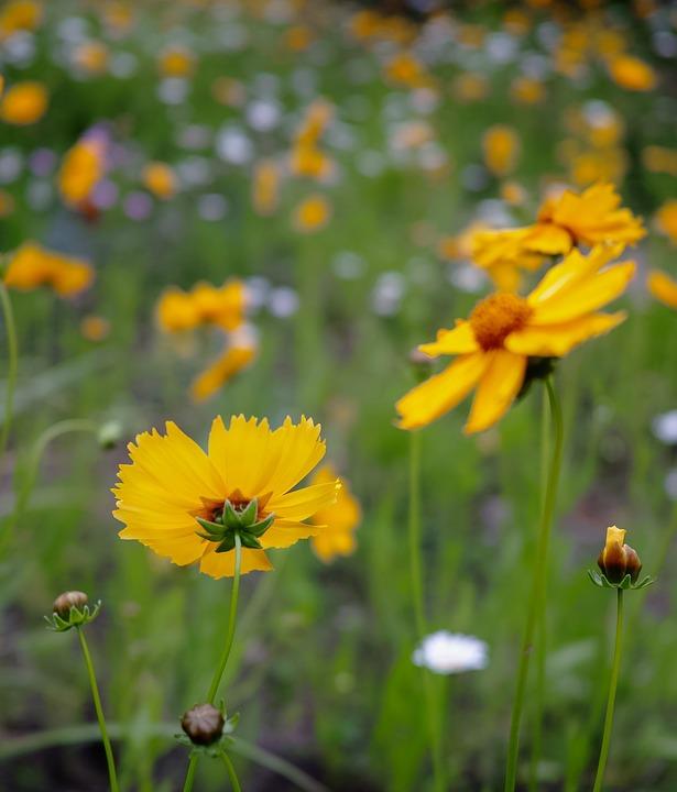 Flower, Yellow, Scenery