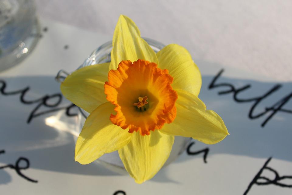 Flower, Yellow, Yellow Flower, Stamens, Pistilli