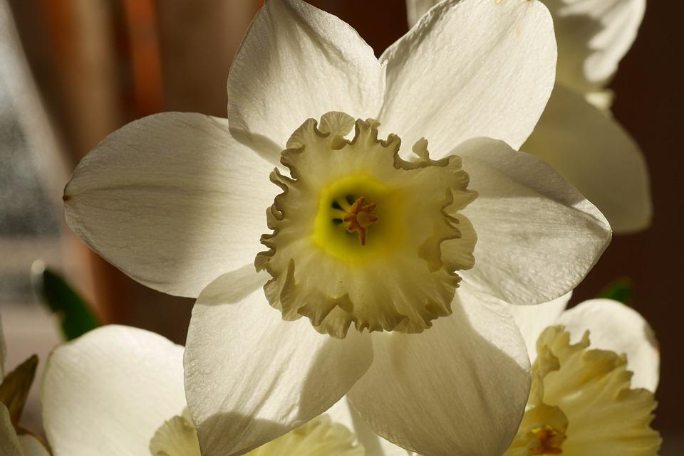 Easter, Flower, Easter Flower, Yellow, White