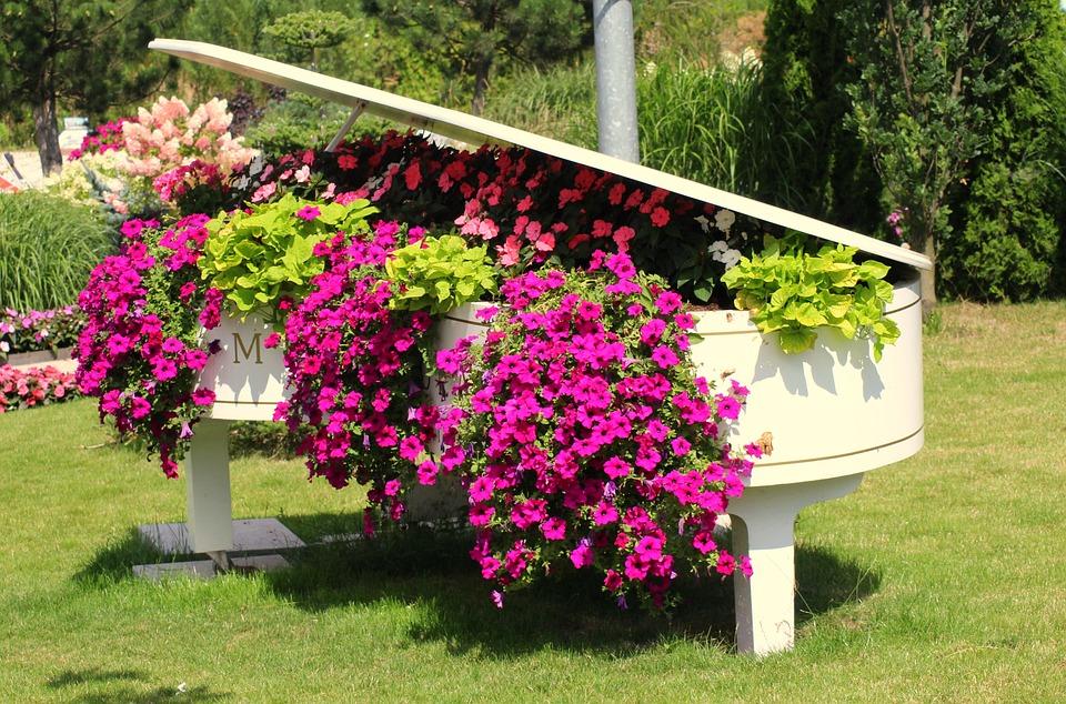 Flowers, Petunia Summer, Decoration, Piano, Flowering