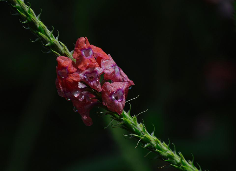 Costa Rica, Plant, Flower, Flowering, Flora, Flowers