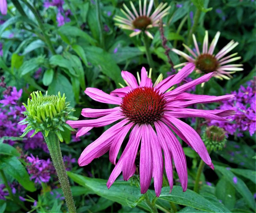 Flowers, Flower, Garden, Plant, Nature, Flowering
