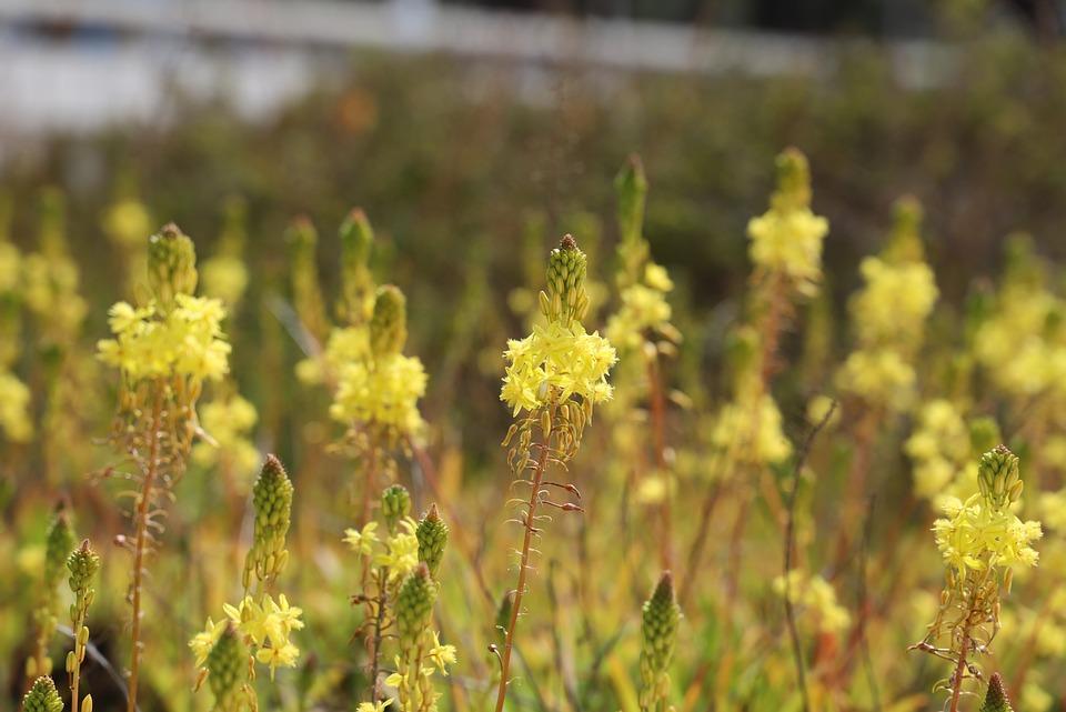 Flower, Nature, Plant, Hayfield, Flowering, Field