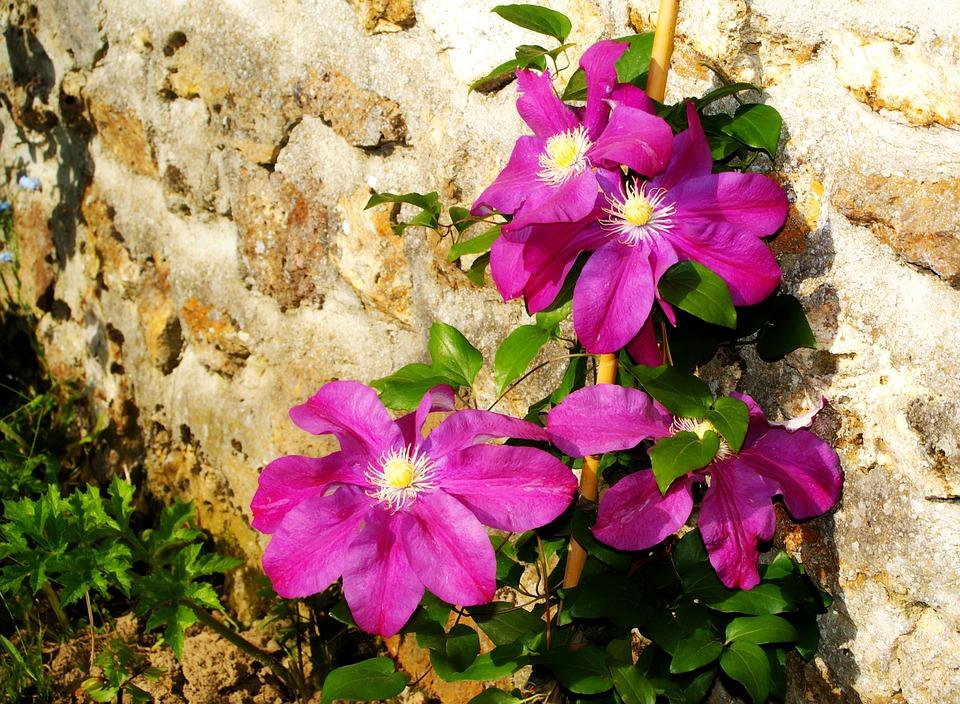 Flowers, Passionflower, Purple, Flowering, Spring