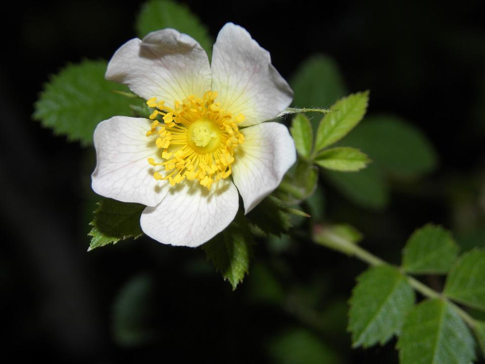 Flower, Flowering, Plant, Spring, Summer, Petals, Flora
