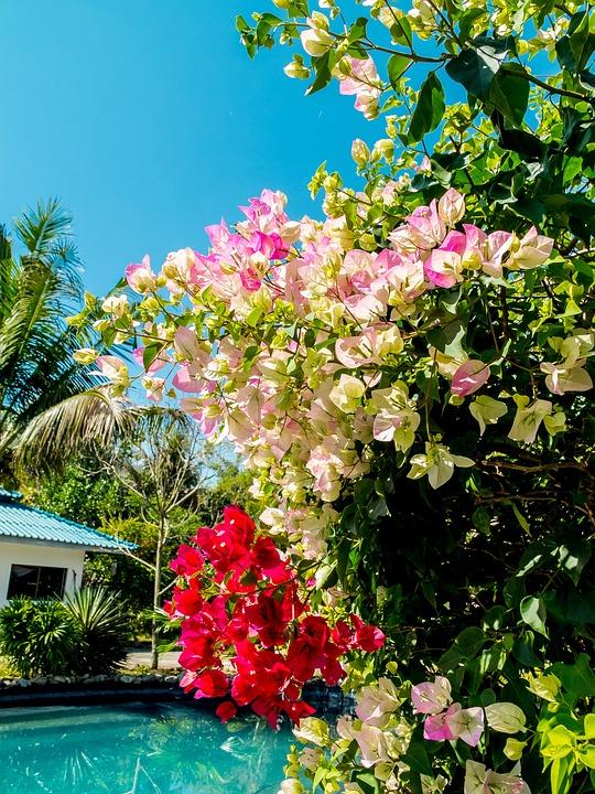Blossom, Bloom, Flower, Flowering Shrub, Colorful