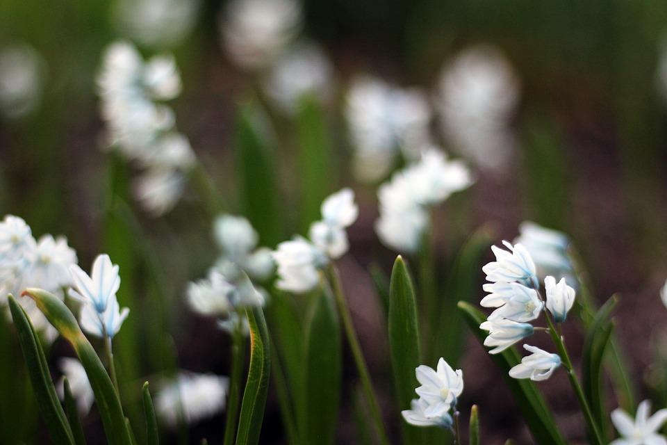 Flower, Flowers, Spring, Bloom, Flowering Trees