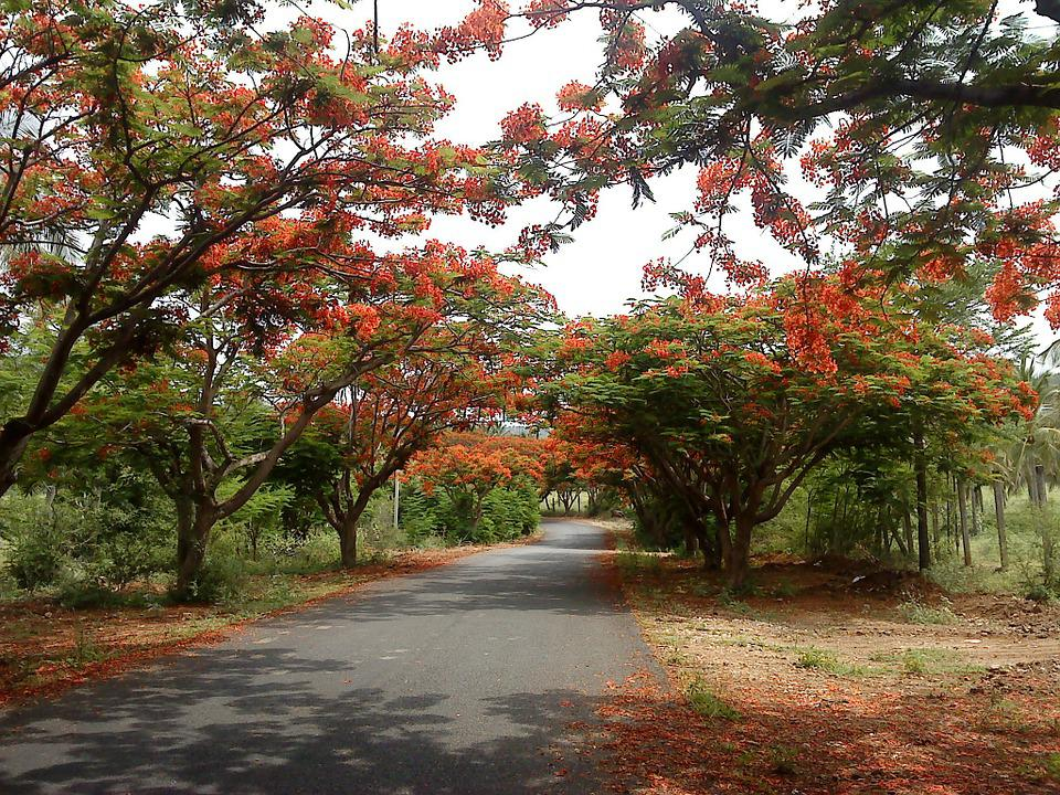Road, Alley, Flowering Trees, Scenic, Countryside
