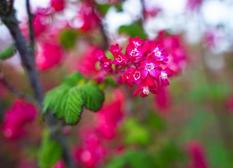 Flowering Twig, Branch, Flowers, Pink, White